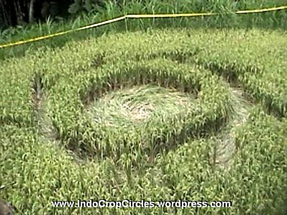 crop-circle-magelang
