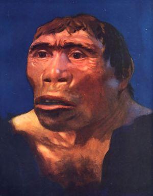Fosil Tengkorak Manusia Jawa (Pithecanthropus Erectus) yang ditemukan di Solo