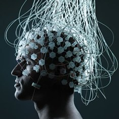brains memory