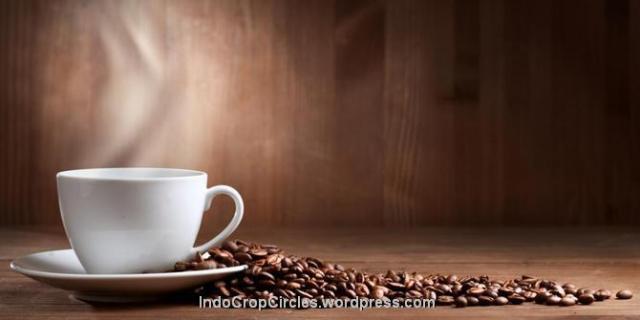 kopi coffee 03