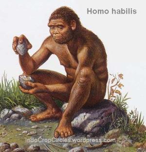 homo habilis 3
