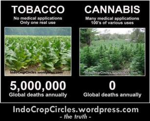 cannabis and tobbaco