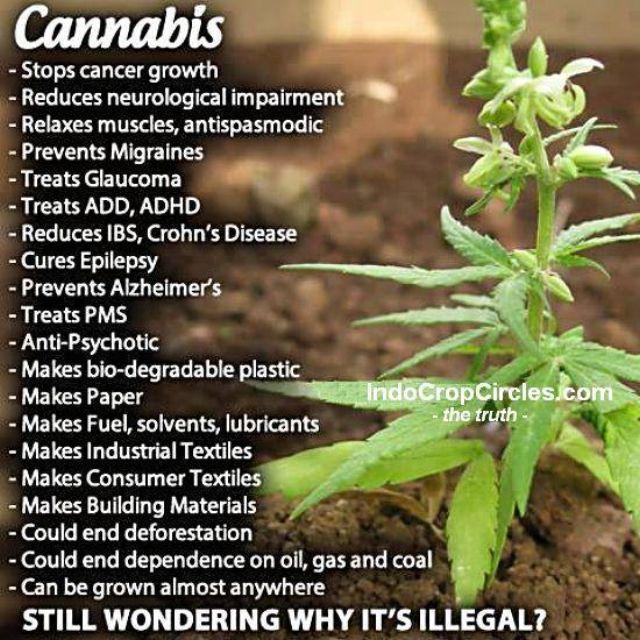 cannabis ganja benefits