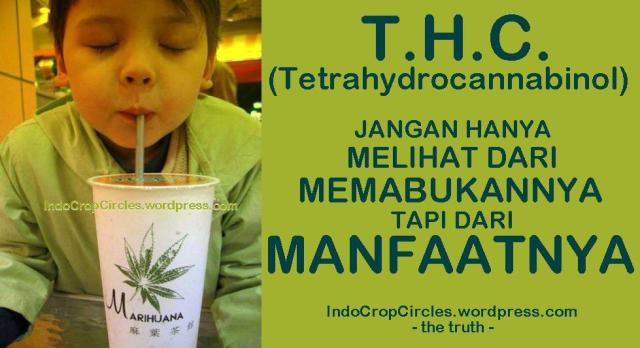 cannabis ganja obat kanker