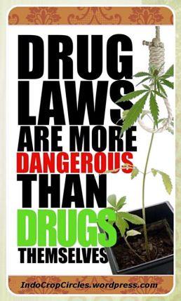 cannabis legal 04