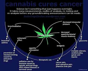 cannabis uses