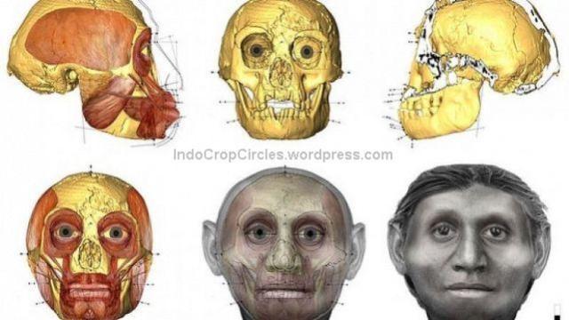 Homo floresiensis orang-kerdil-perempuan-dari-flores-diwajahkan