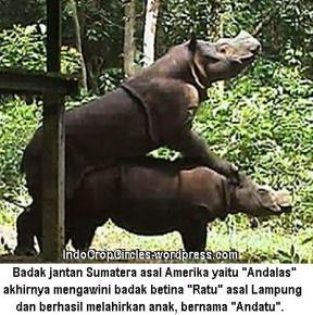 Badak Sumatera kawin Andalas dan Ratu