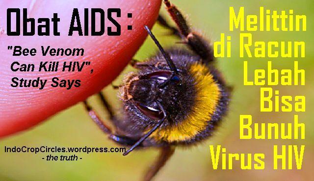 Melittin di Racun Lebah Bisa Bunuh Virus HIV Bee Venom Can Kill HIV