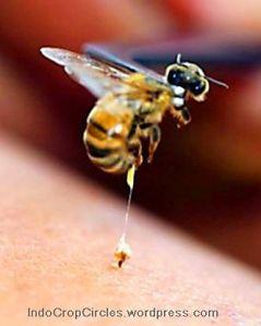 racun-lebah-melittin-bunuh-hiv-aids 2