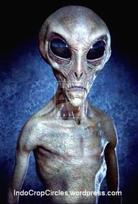 Alien zeta Tall_Grey_Alien