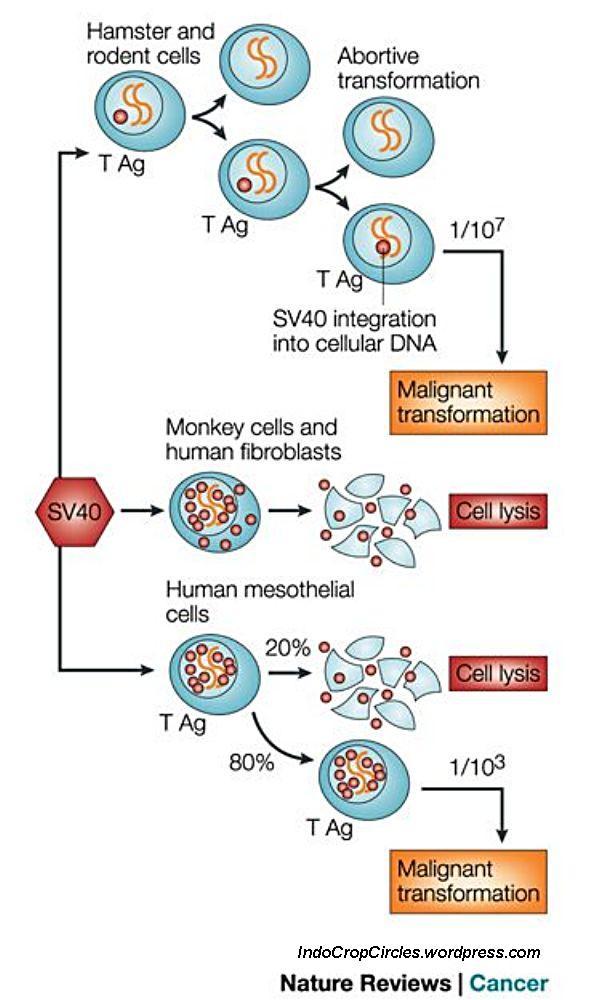 virus polio 01