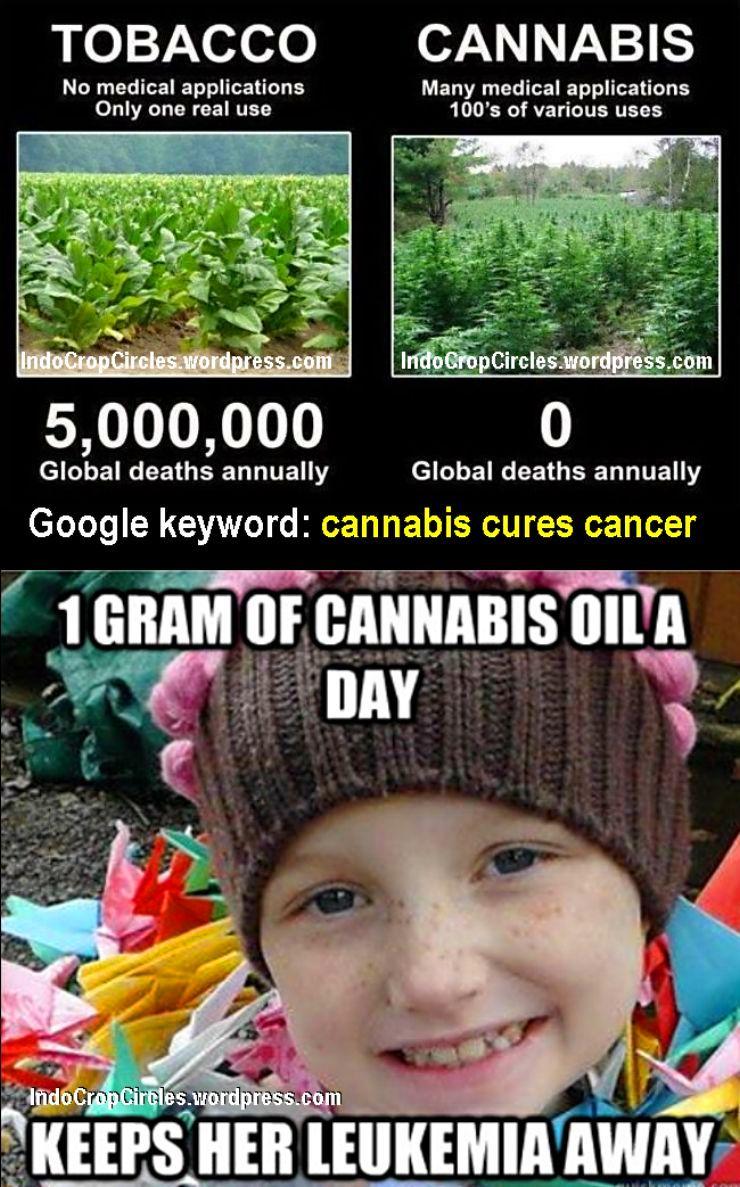 cannabis cures cancer