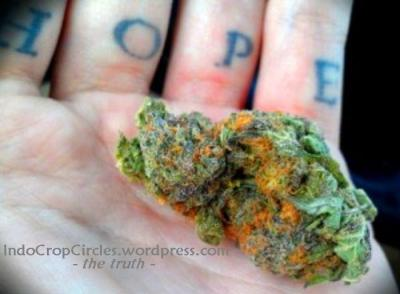 cannabis herbal hope for cancer