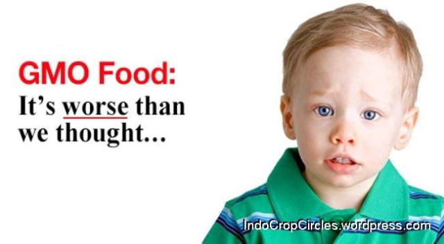 gmo food header