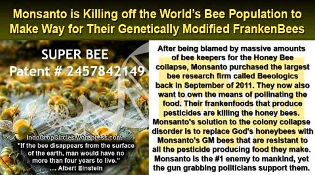 monsanto killing bee