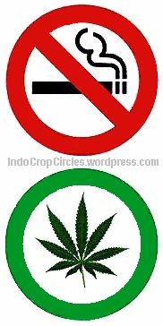 tobacco no cannabis yes