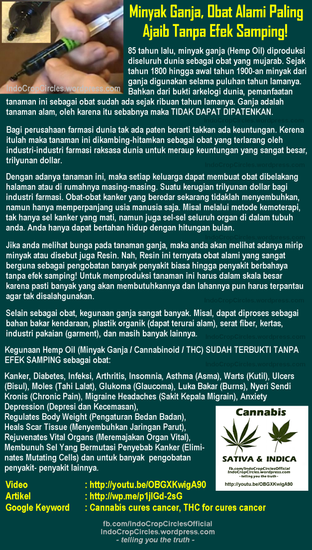 minyak ganja cannabinoid hemp oil