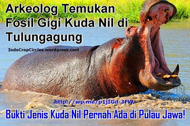 ancient hippopotamus kuda nil di ditemukan di tulungagung banner