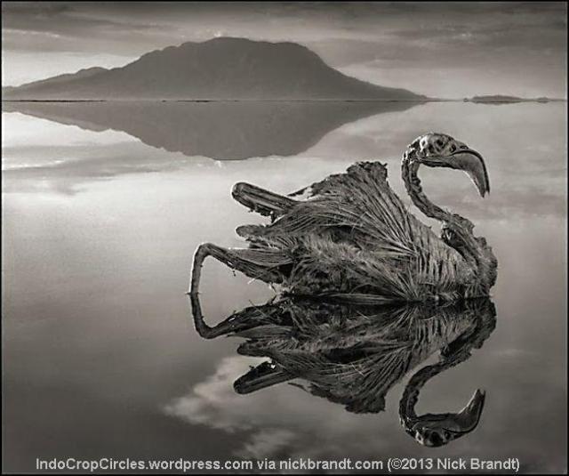 rocky animal Natron Lake 06