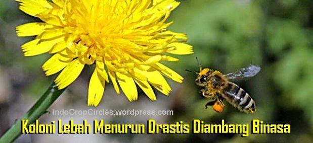 bee lebah tawon punah binasa header