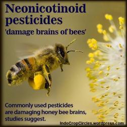 bee neonicotinoid lebah gmo corn 02