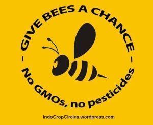 bee neonicotinoid lebah gmo corn 04
