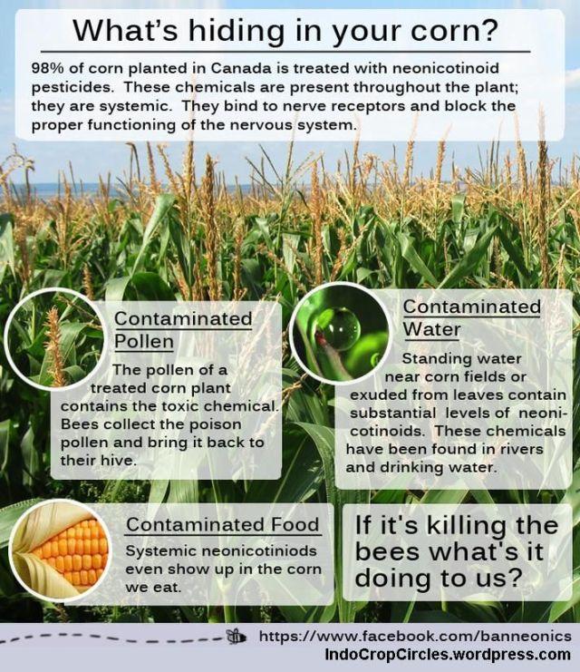 bee neonicotinoid lebah gmo corn