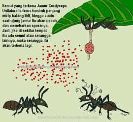 Cara Jamur Cordyceps menyerang semut dan menyebar