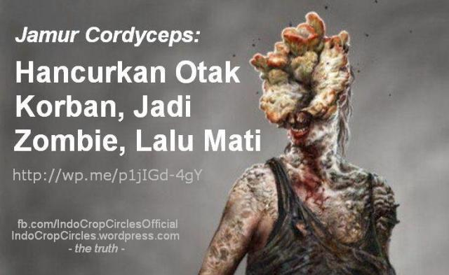 Jamur Cordyceps  Manusia Seperti Zombie banner