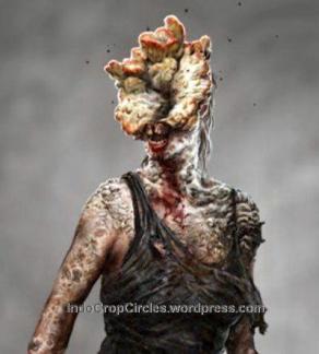 Jamur Cordyceps Menjangkiti Manusia Seperti Zombie