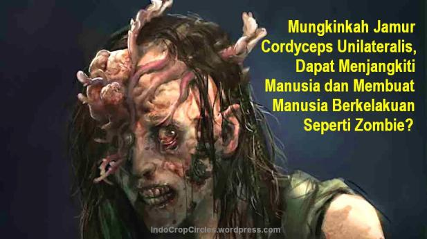 Jamur Cordyceps unilateralis Menjangkiti Manusia Seperti Zombie