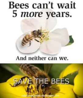 lebah musnah manusia ikut punah - selamatkan lebah dunia 02
