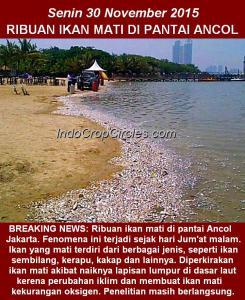 Ribuan ikan mati di pantai ancol senin 30 November 2015
