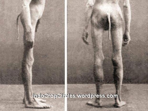 orang boentoet buntut tail man