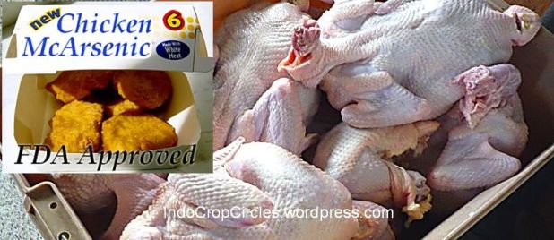 banned ayam mengandung arsenik USA