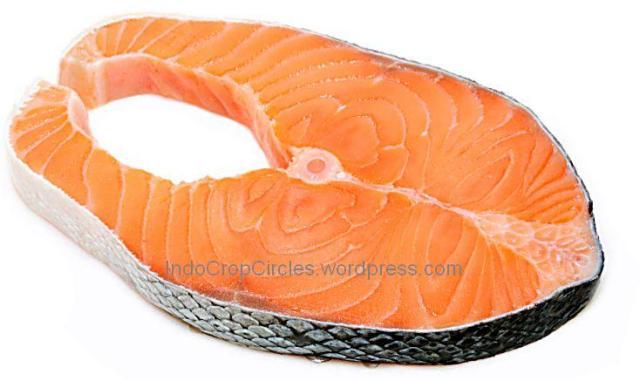 banned ikan salmon USA