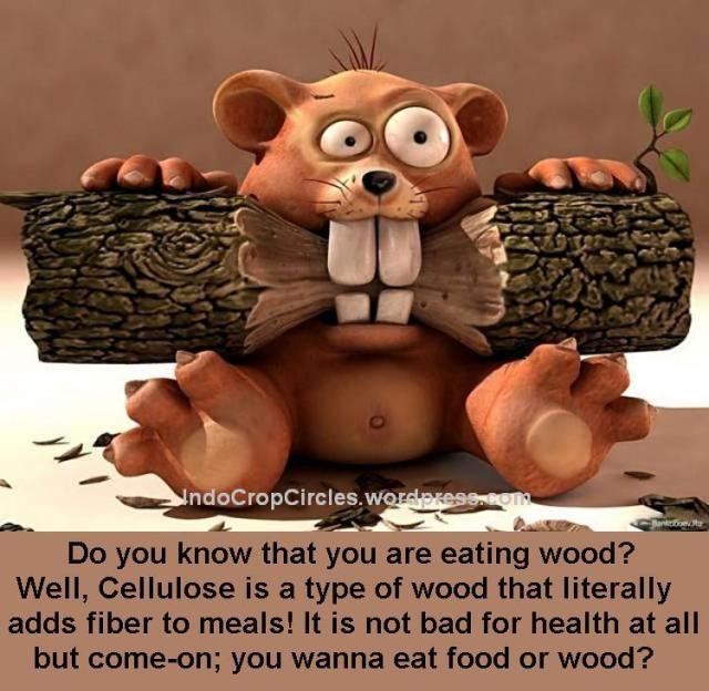 dangerous not healthy fast food 07
