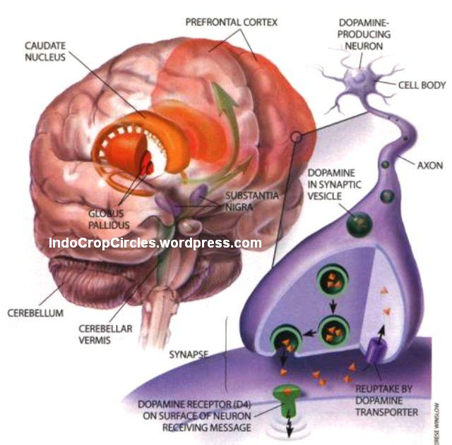 """Ilmuwan """"Temukan"""" Organ Baru Tak Jauh dari Mata yang Membuka Peluang Penyembuhan Kanker"""