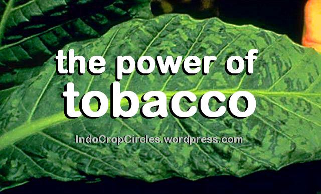 the power of tobacco tembakau