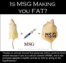msg makes mice fat