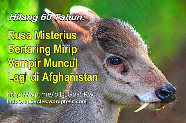 RUSA BERTARING AFGHANISTAN BANNER