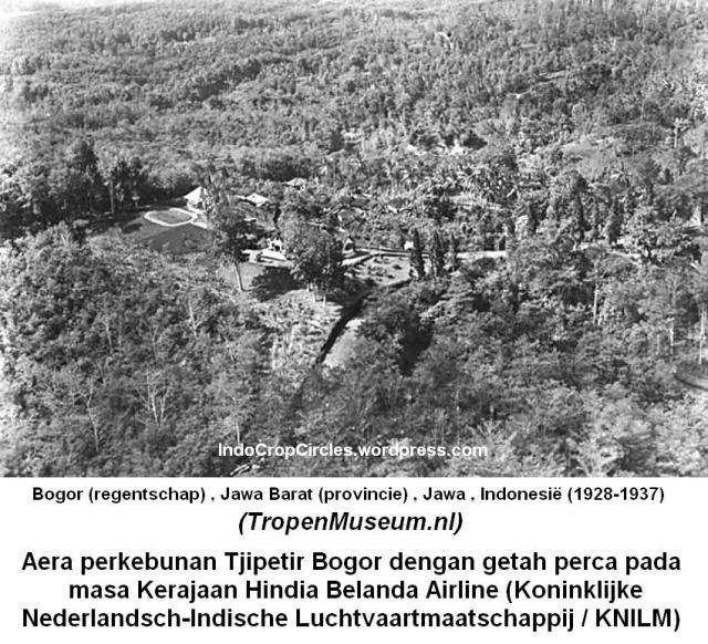Tjipetir plantation