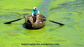 virus bodoh dari algae