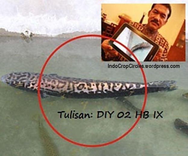 ikan toman tulisan Jogja dan DIY 02
