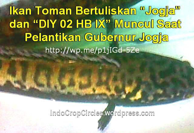 ikan toman tulisan Jogja dan DIY banner
