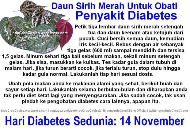 Khasiat atau manfaat daun Sirih Merah juga bisa menjadi obat sembuhkan Diabetes.