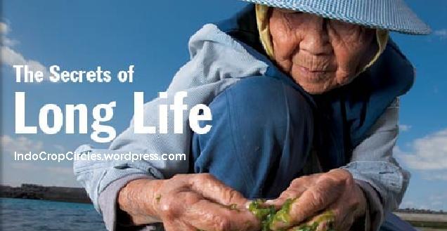 longlife header