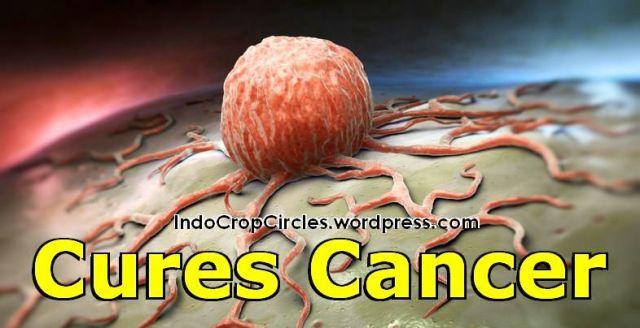 obat kanker cures cancer header