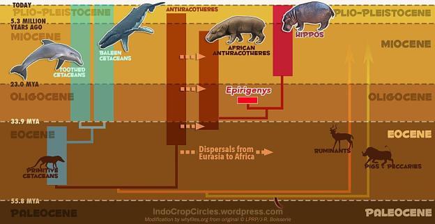 hewan phylogenetic_diagram
